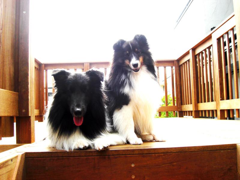愛犬と過ごすウッドデッキ